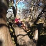 Student sitting on Tree